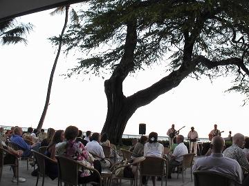 巨大なキアヴェの木とフラダンス