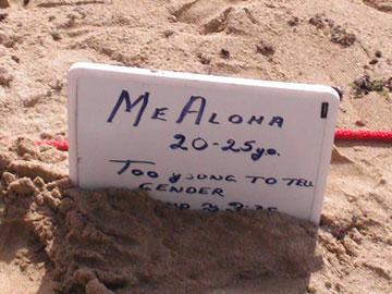 ラニケアビーチの海ガメさん03