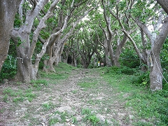 林の中の道を進みます。