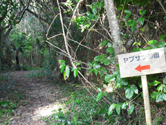遊歩道を進むと、ヤブサチ御嶽の看板が出てきます。