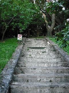 森の中へ続く階段