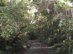 クバの御嶽入口