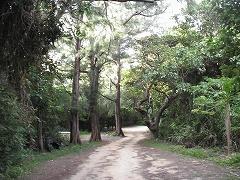 海岸線を抜け、細い林道を走ります。